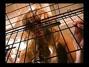 Mistress open her slave cage for boyfriend's mouth job